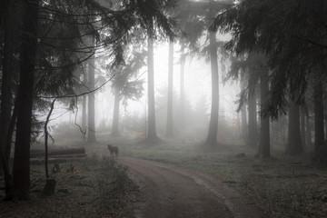 Deutschland, Hessen, Nebel im Naturpark Taunus