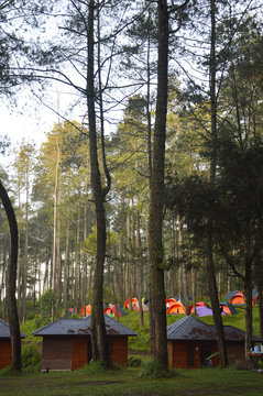 lodging in the woods