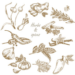 Kitchen herbs and spices set hand drawn vector illustration