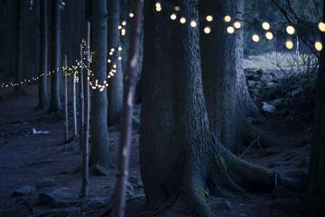 Deutschland, Bayern, Sankt Englmar, Lichterkette im Wald