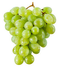 Fototapete - Green grape isolated. With clipping path