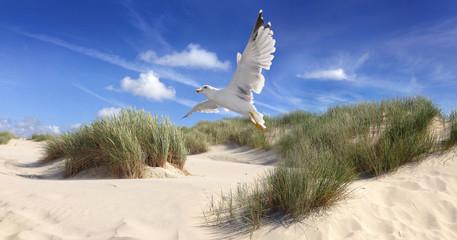 Gull over dunes Wall mural