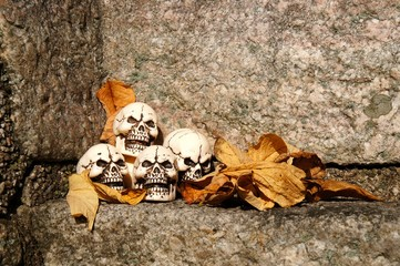 Skulls lying in the fallen leaves.