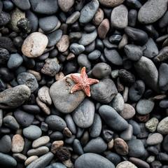 Etoile étoile de mer dans galets