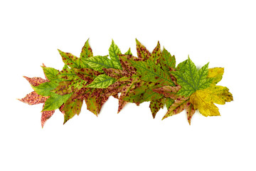 arched arrangement of colorful leaves