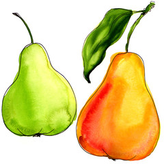 watercolor tasty pears isolated