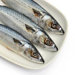 Fresh fish Mackerel, tuna, saba, in white plate