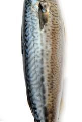 Fresh fish Mackerel