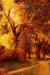 Foto op Aluminium Herfst Colorful autumn