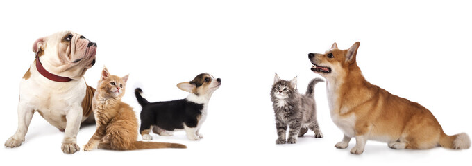 group of dogs and cat look up