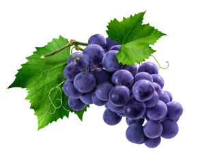 Purple grapes bunch isolated on white background