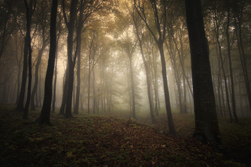 forest with fog in the morning