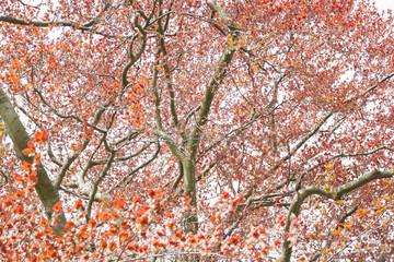 Branch background