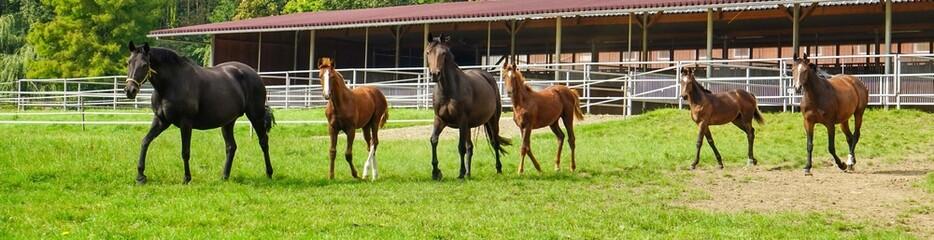 Papiers peints Equitation Pferdezucht, Pferde auf Weide - Panorama