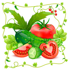 Still life of tomatoes and cucumbers vector