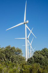 Wind turbines over bush in the countryside