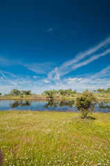 Fotobehang Pistache Pastures and pond. Extremadura, Spain. Oak trees and blue sky