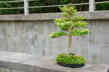 Bonsai in the botanic garden