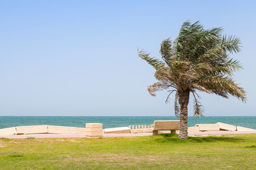 Palm and bench on the coast of Persian Gulf, Saudi Arabia