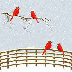 Red birds on branch and fence