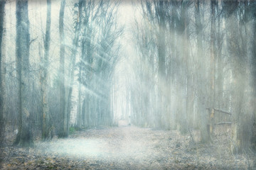 Foto op Canvas Bos mystical forest fog