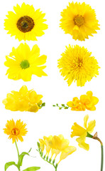 Collage of beautiful yellow flowers