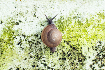 Snail climbing on the wall.