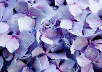 Close up photo of purple flower