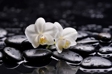Two white orchid on pebbles –wet background