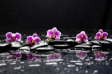 still life with black stone and five orchid
