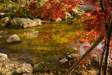 A Pond with Autumn Tints of Maple Leaves