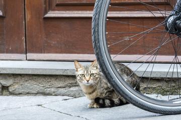 Bolsena (Italy): cat