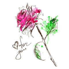 Sketch and watercolor rose