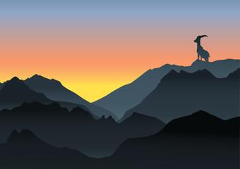 Steinbock  in den Alpen