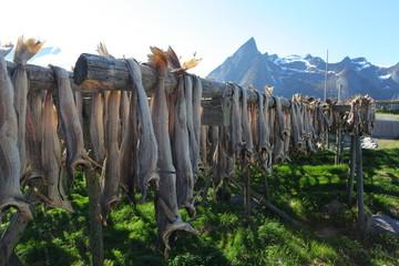 Wall Mural - Dried cod in Lofoten