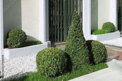 Buis boule dans un espace vert urbain stock photo and for Espace vert urbain