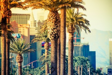 Las Vegas Strip Palms