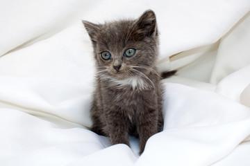 Сute kitten
