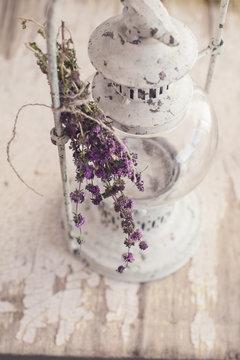 Bouquet of mentha pulegium herbs