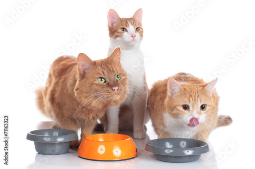 Best cat food for male cats with urinary tract problems