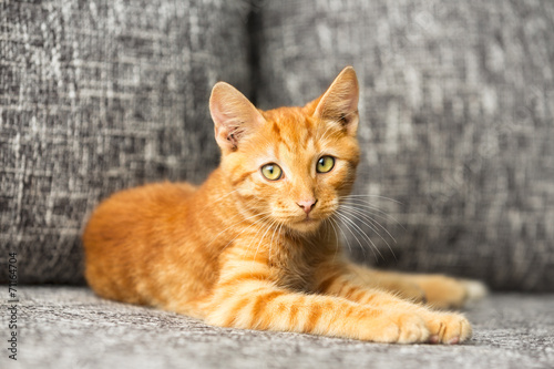 Orange tabby kittens for sale denver