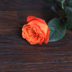 Rose with copy space, square image