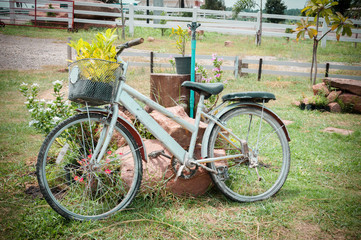 Model of an old bicycle equipped with basket of plants / Bicycle