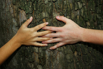 Close-up of hands hugging tree