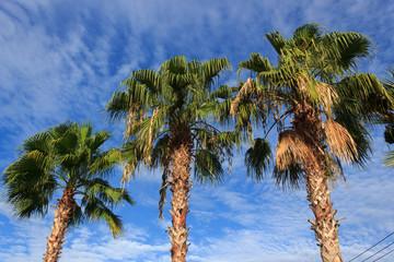 Three plam trees.