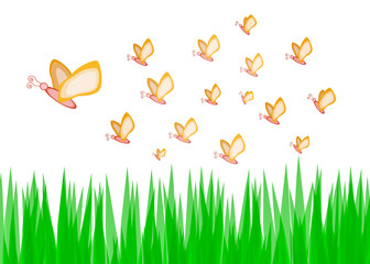Butterfly with green grass  background vector illustration