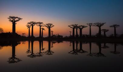 Fotorolgordijn Baobab Sunset over Alley of the baobabs, Madagascar.