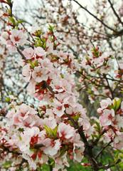 Cherry blossom felt.