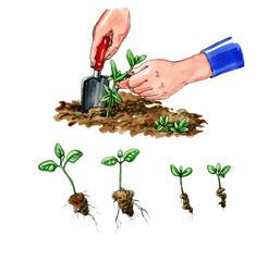 Planting seedlings. Botany
