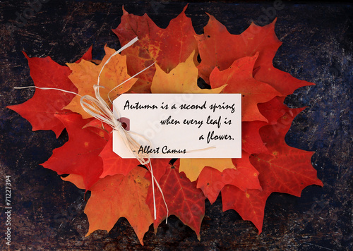 Fall Quote On Maple Leaves Background